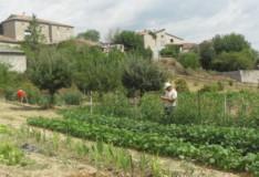 Le potager et ses jardiniers